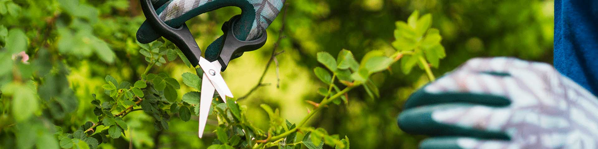jardinagem-e-meio-ambiente